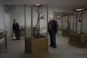 A Pigeon Sat on a Branch (Museum)