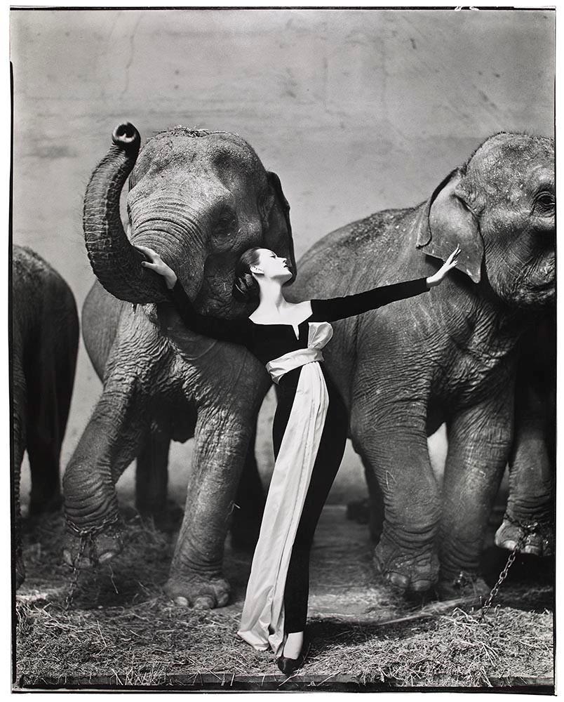 Avedon - Dovima with Elephants