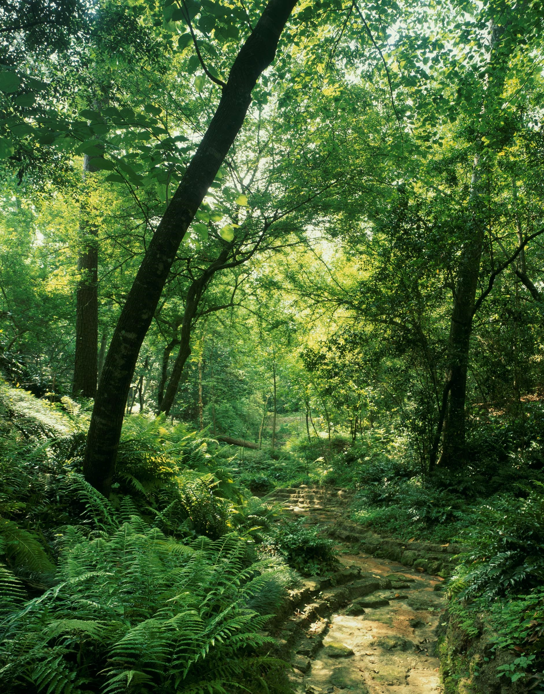 Bayou Bend woodland ravine