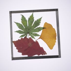 BB Summer Discovery Days | Leaf Coaster Activity Kit