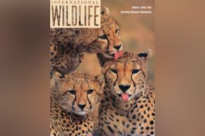Int'l Wildlife magazine