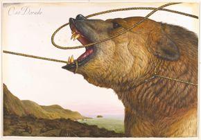 oso dorado