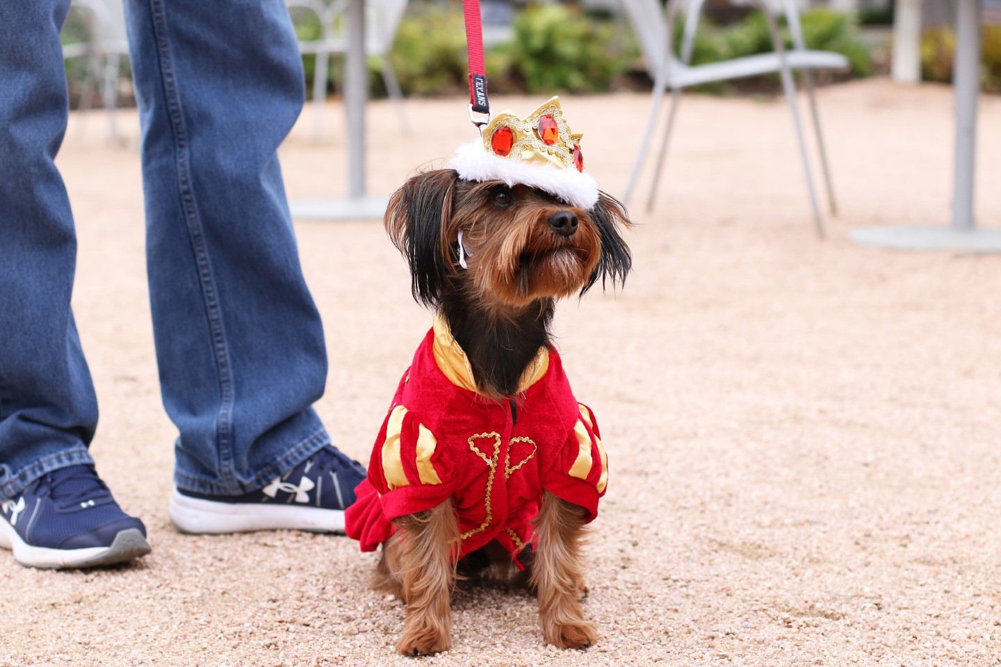 Royals doggie day - dog in costume