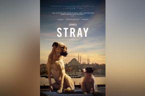Stray | movie poster