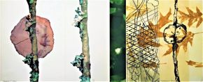 Suzanne M. Manns, Fungus and Gall, 2014, monoprint lithograph, etching, and digital images
